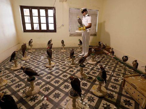 دستگیری محموله حامل 75 پرنده شکاری قاچاق در کراچی پاکستان/ خبرگزاری فرانسه