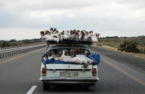 حمل غاز با خودرو در اتوبانی در شهر گنجه جمهوری آذربایجان/ رویترز