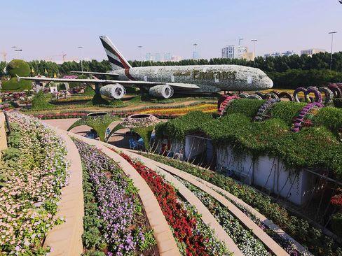 بازگشایی باغ گل و گیاه در دوبی/ گلف نیوز
