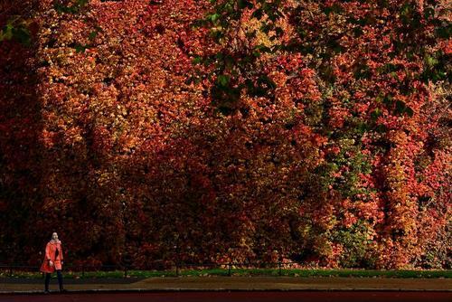 طبیعت پاییزی لندن/ رویترز
