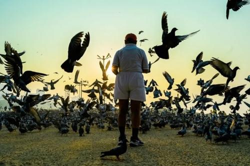 غذا دادن به کبوترها در شهر بمبئی هند/ خبرگزاری فرانسه