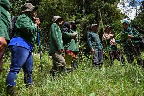 جنگلبانان زن در اندونزی/ خبرگزاری فرانسه