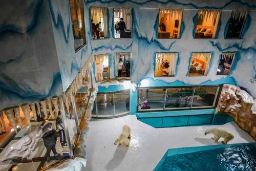 محل نگهداری خرس های قطبی در هتلی تازه تاسیس در هاربین چین/ خبرگزاری فرانسه