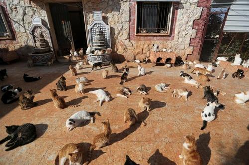 خانه گربه ها در ادلب سوریه/ رویترز