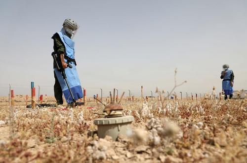 مشارکت زنان عراقی در عملیات مین روبی از زمین های اطراف شهر بصره در جنوب عراق/ رویترز