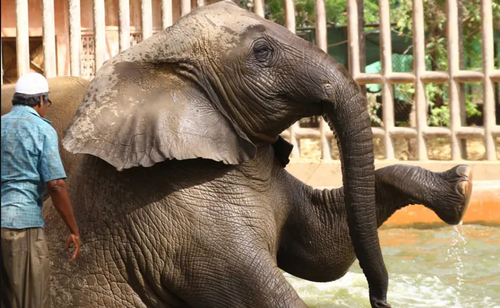 شستشوی فیل در باغ وحش شهر کراچی پاکستان/ EPA