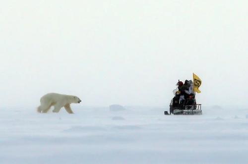 نزدیک شدن یک خرس قطبی به خودرو حامل یک تیم تحقیق درباره خرس های قطبی و تغییرات آب و هوایی در روسیه/ ایتارتاس