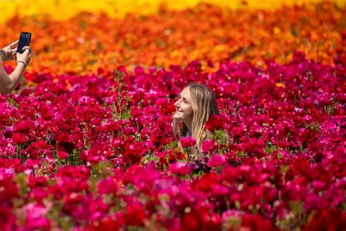 عکس گرفتن در یک مزرعه 50 هکتاری گل در ایالت کالیفرنیا آمریکا/ رویترز