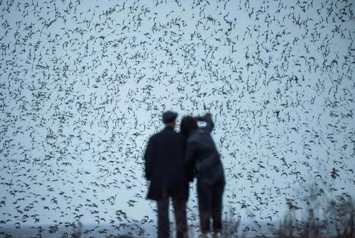 تماشای پرواز پرندگان مهاجر در حاشیه رود یالو در داندونگ چین/ خبرگزاری فرانسه