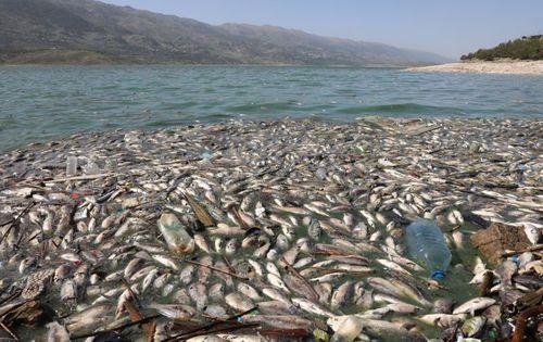 مرگ دهها هزار ماهی بر اثر آلودگی در رودخانه لیتانی لبنان/ رویترز