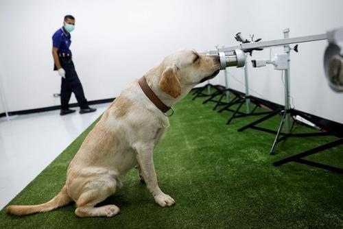 سگ کرونا یاب در بانکوک/ رویترز
