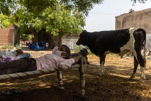 کلینیک در فضای باز برای بیماران کرونایی در روستایی در هند. بیمارستان های هند ظرفیت پذیرش بیماران بدحال کرونایی را ندارند./ رویترز