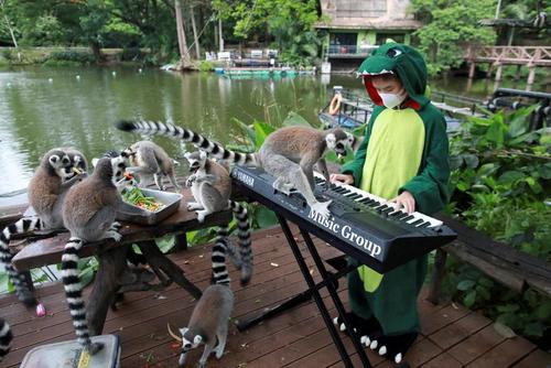 باغ وحش شهر چونبوری تایلند/ رویترز