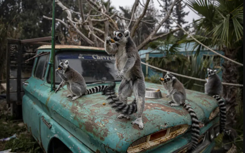 باغ وحش شهر سانتیاگو شیلی/ آسوشیتدپرس