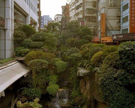 یک جنگل شهری، تایوان