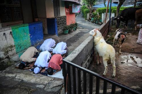 اقامه نماز عید قربان در جاوه اندونزی/ رویترز