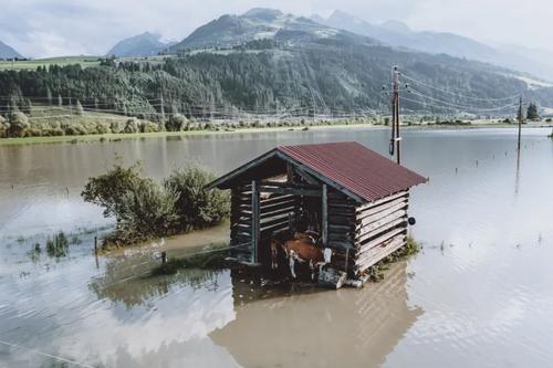 محصور ماندن گاوها در سیل در روستایی در اتریش/ خبرگزاری فرانسه