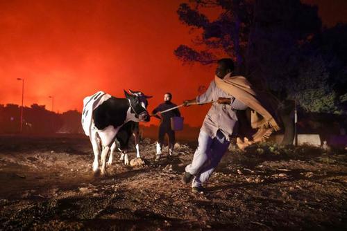 فرار از مناطق آتش سوزی جنگلی در شمال شهر آتن یونان/ رویترز