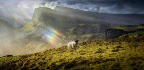 عکاس : «Calvin Downes» / موقعیت عکس : اسکاتلند