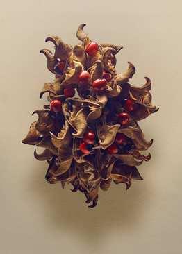 نخود تسبیح یا چشم خرچنگی (Abrus precatorius) – از دانه های این گیاه برای تزیین گردنبندها و به عنوان مهره در ساخت آلات موسیقی استفاده می شود، اما آنها بسیار سمی هستند و خوردن یک عدد از آن نیز می تواند موجب مرگ یک انسان بالغ شود.