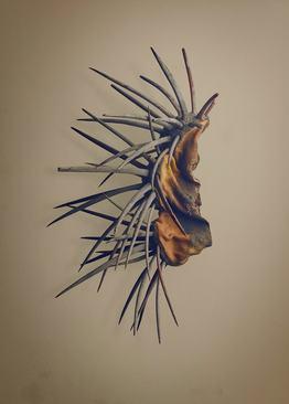 سندیلون (Eriosyce aurata) – این دانه به یک کاکتوس که در شیلی یافت می شود، تعلق دارد. این دانه از ظاهری منحصر به فرد برخوردار است و خارها وظیفه محافظت از دانه را بر عهده دارند.