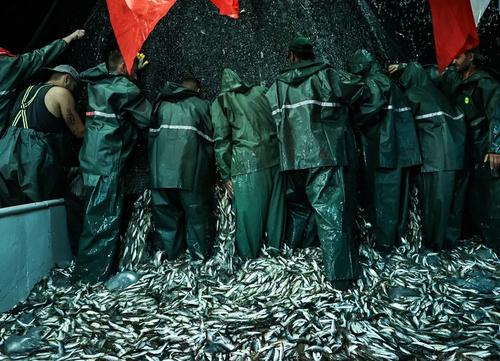 آغاز فصل صید ماهی در شهر استانبول ترکیه/ خبرگزاری آناتولی