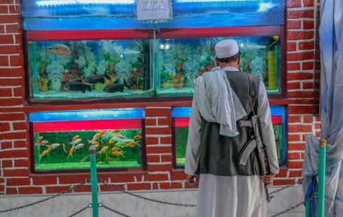 یک نیروی طالبان در آکواریوم باغ وحش شهر کابل/ خبرگزاری فرانسه