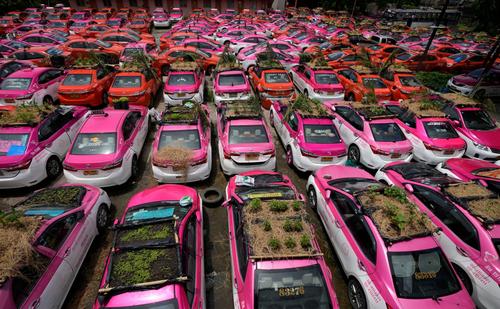 کاشت سبزه روی سقف تاکسی های بیکار شده در اثر بحران همه گیری ویروس کرونا در شهر بانکوک تایلند/ آسوشیتدپرس