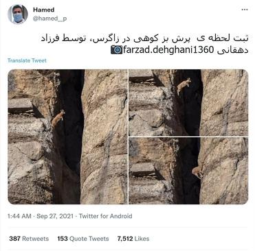 «Hamed» در توئیتی با 7512 لایک، تصویری از پرش یک بز کوهی منتشر کرده و نوشته است:<br>ثبت لحظه ی  پرش بز کوهی در زاگرس، توسط فرزاد دهقانی farzad.dehghani1360