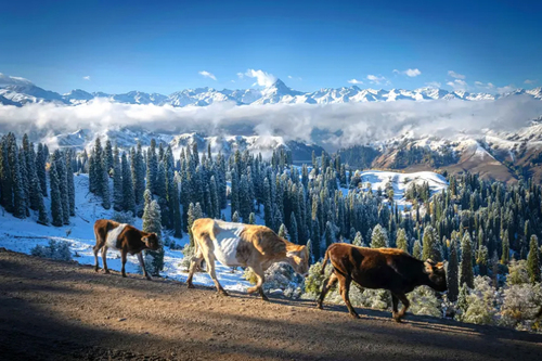 طبیعت زمستانی سین کیانگ چین/ SIPA